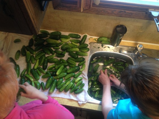 Washing tons and tons of cucumbers