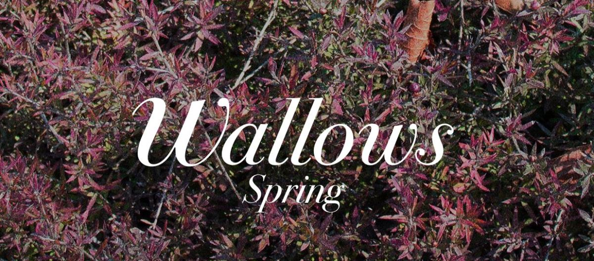 [REVIEW] Wallows - 'Spring' EP
