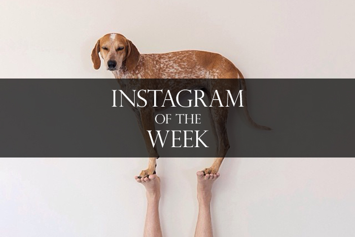 Instagram-of-the-week-thiswildidea