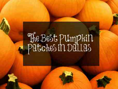 the best pumpkin patches in dallas
