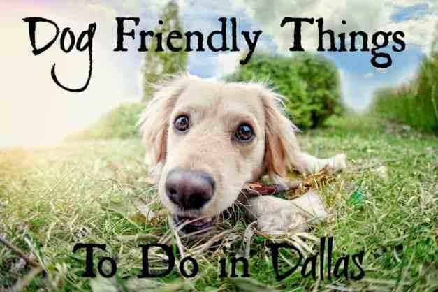 Dog Friendly Things Dallas Edited