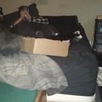 Sinta In A Box