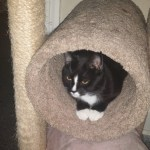 Sinta in his cat tree