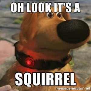 Picture of a dog with the words Oh Look A Squirrel