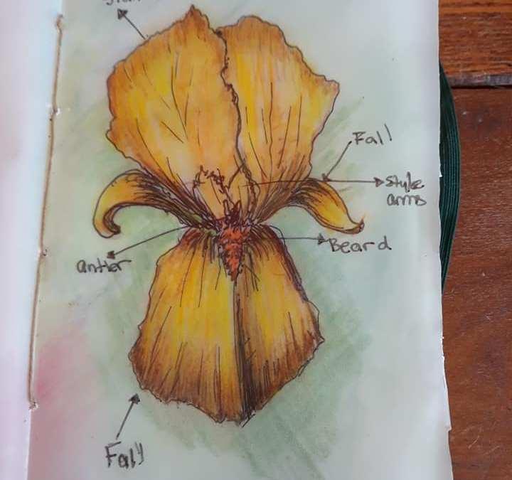 Field Journaling With Geoff Davis