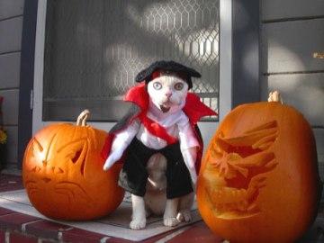 Spooky Kitty!