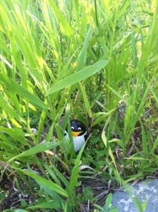 NinjaRP Grass