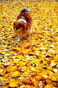 Optimized-autumn