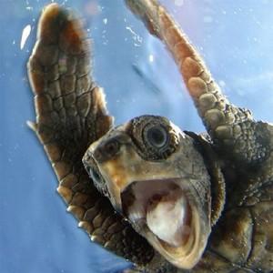 ecstatic_turtle