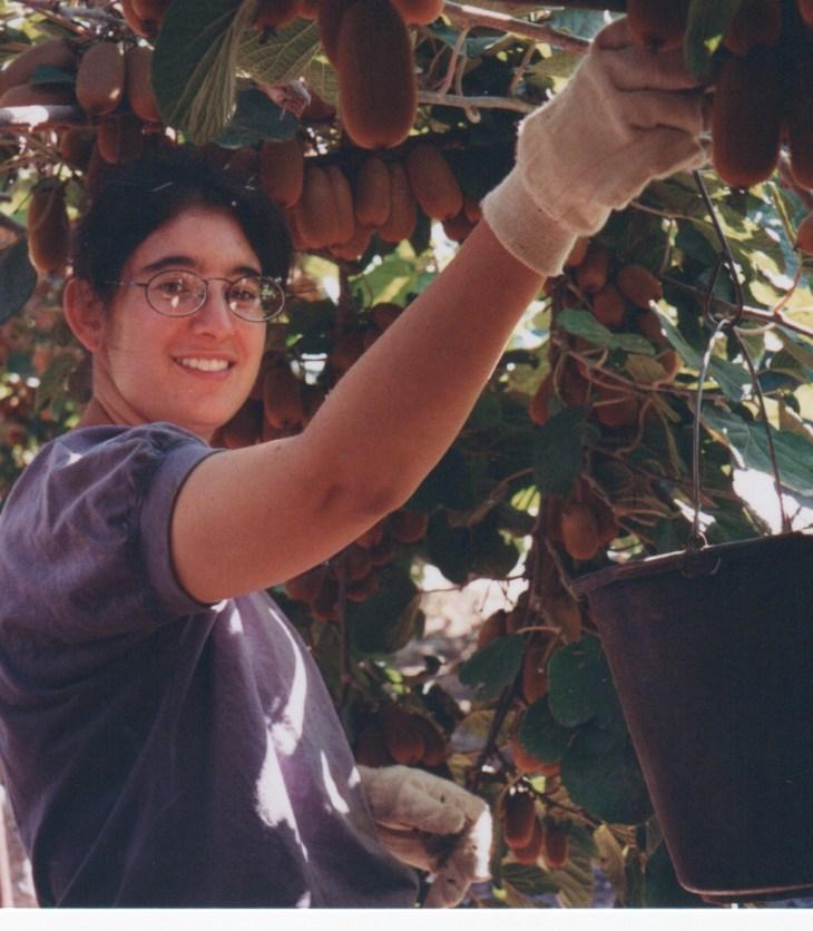 Picking kiwis in Israel