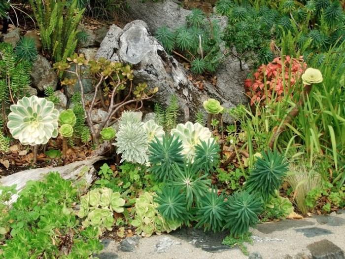 Choosing Native Species Garden