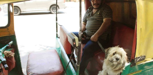 City Life – Glorified Golf Carts, Around Town