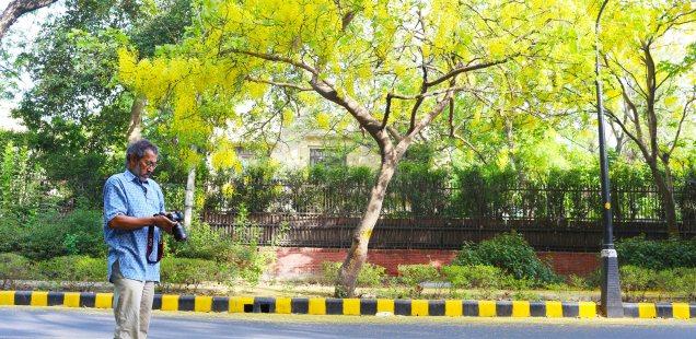 City List – Pradip Krishen's Most Suitable Trees for Delhi