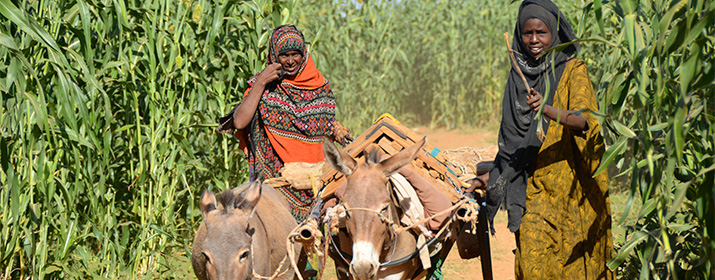 Food & Agriculture Projects, Ethiopia