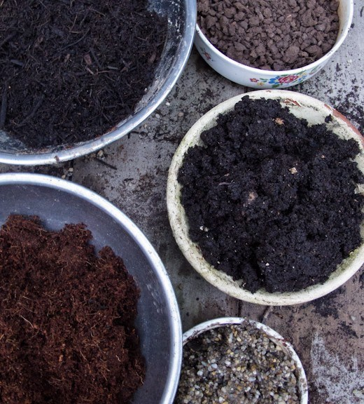 Potting mix ingredients: worm castings, coir, compost, coarse sand, cow manure
