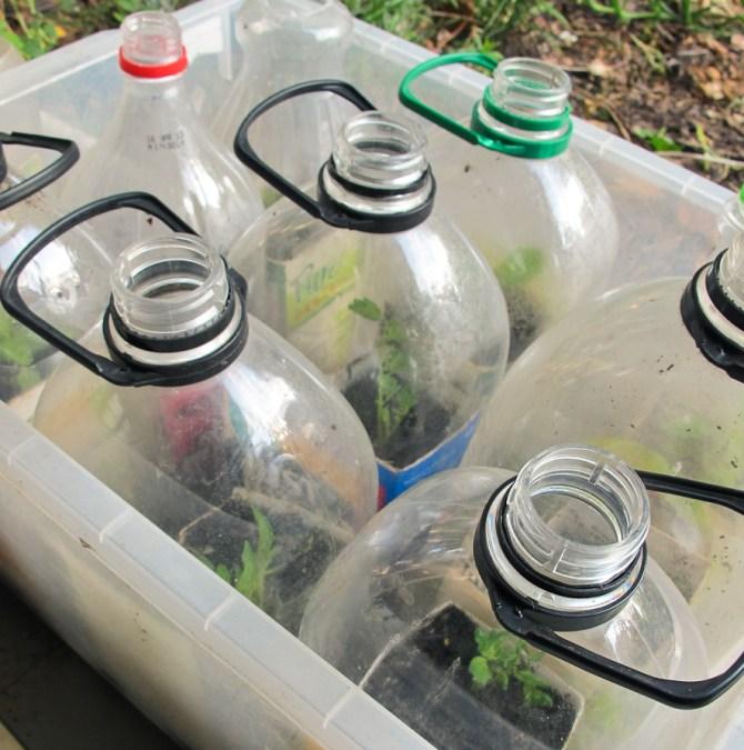 plastic-juice-bottle-greenhouse-propagation