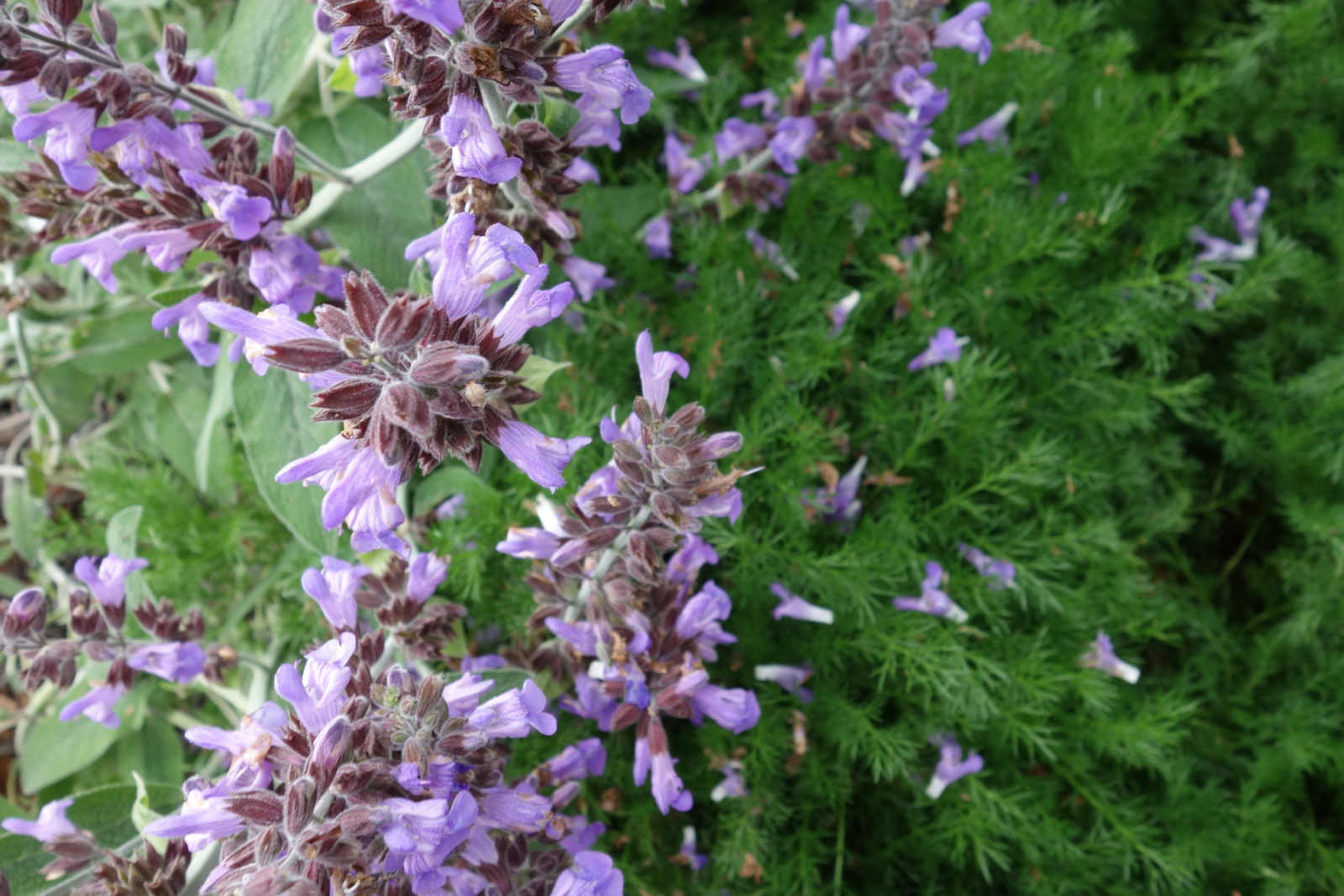 true spring flowers in the edible garden