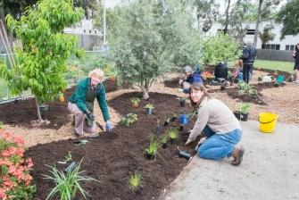 The Desert Echo Permablitz at the Farnham St Food Forest Community Garden