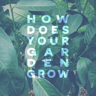 In-Garden-Privacy-Hedge-Shrub-Update-2.jpg