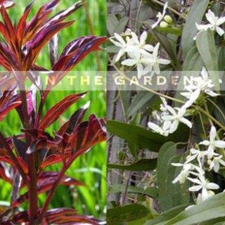 In-the-Garden_0.jpg
