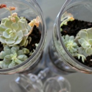 The Design Confidential / DIY Re-purposed Glass Vessel Terrarium