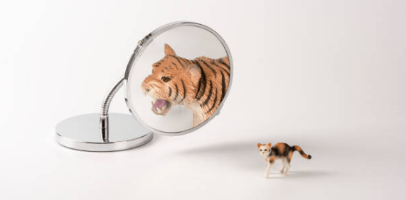 cat tiger mirror