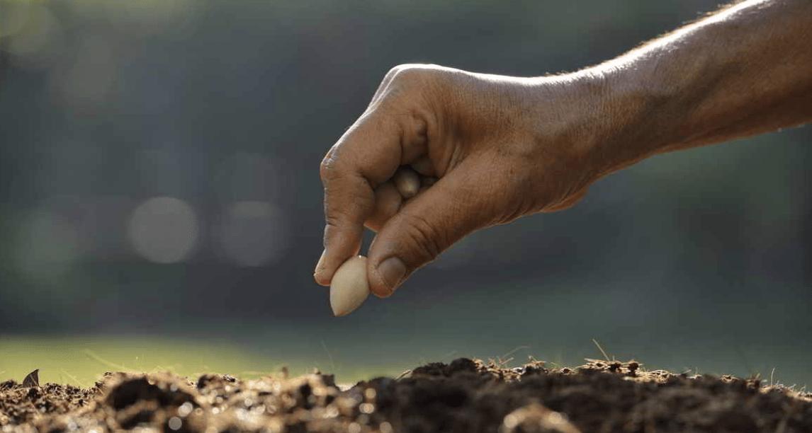 planting seed creativity