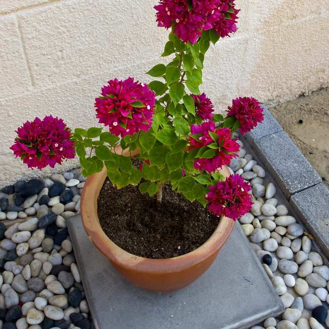 Pebbled yard for potted plants