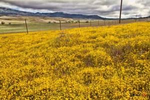 San Felipe Valley