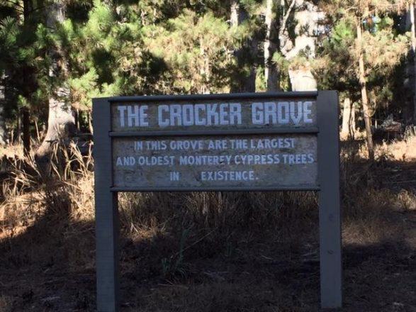 Crocker Grove