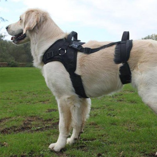 Fit for harness