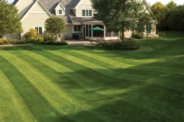 How long does milorganite take to work on a lawn?