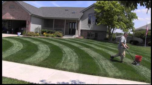 The milorganite release process and the required time duration for the milorganite to work in the yard