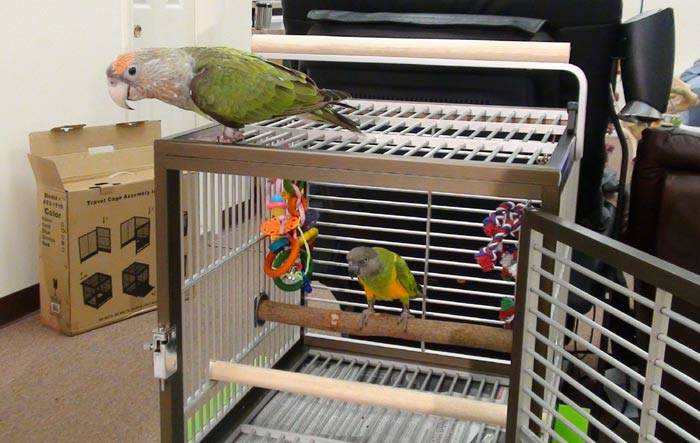 Traveling cage for birds review