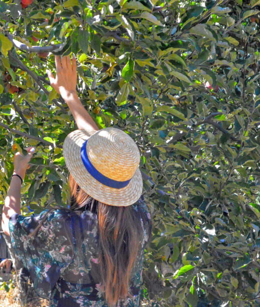 apple-picking-me