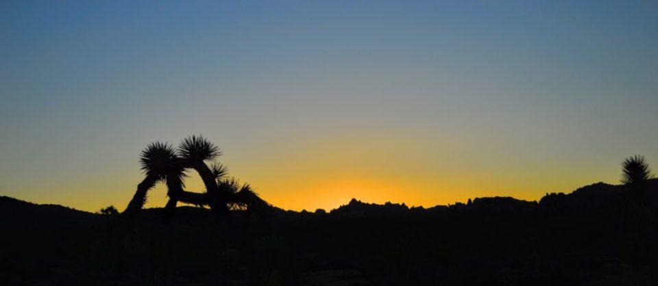joshua-tree-sunset-6
