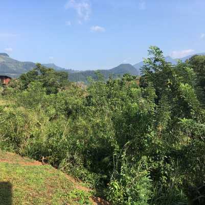 Lush Landscapes in Sri Lanka