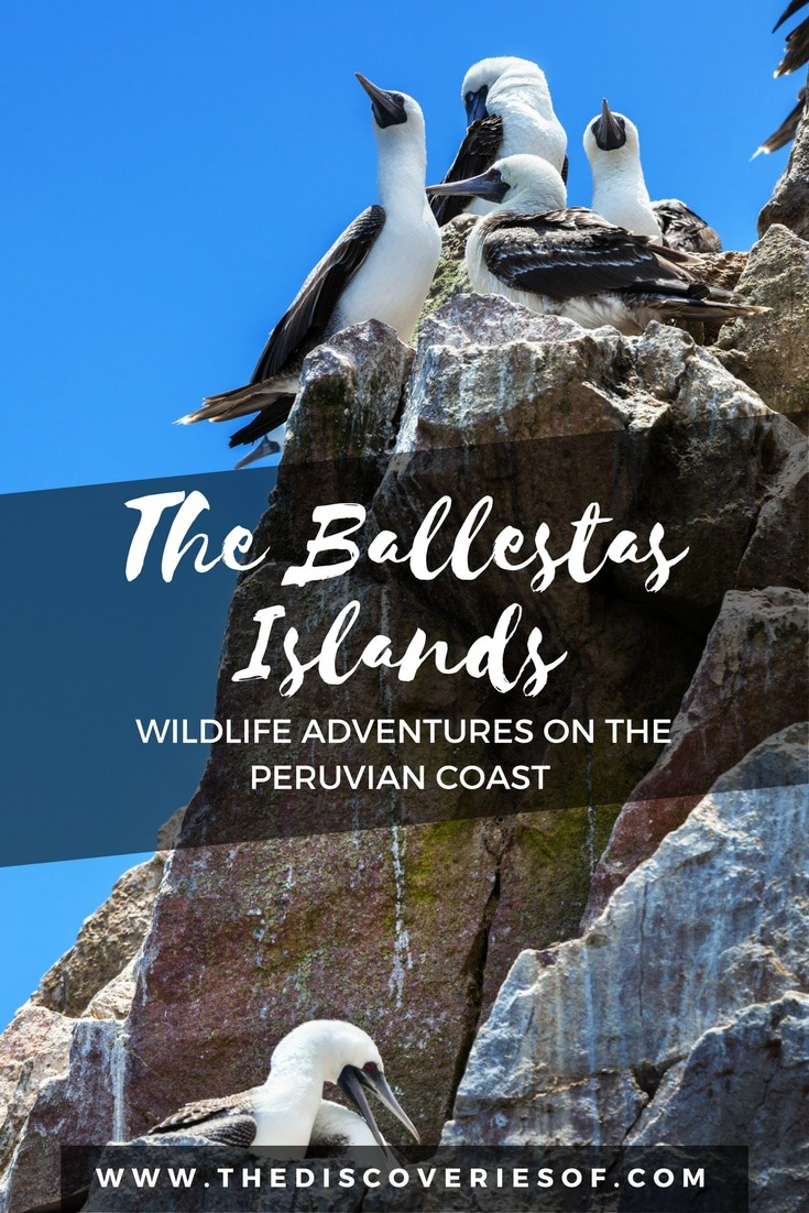 Ballestas Islands, Peru should be at the top of your South America travel itinerary when it comes to spotting wildlife. Here's why.