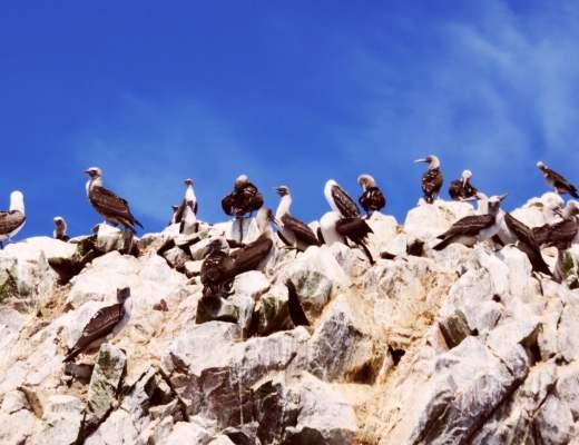Ballestas Islands Peru - A Boat Tour from Paracas