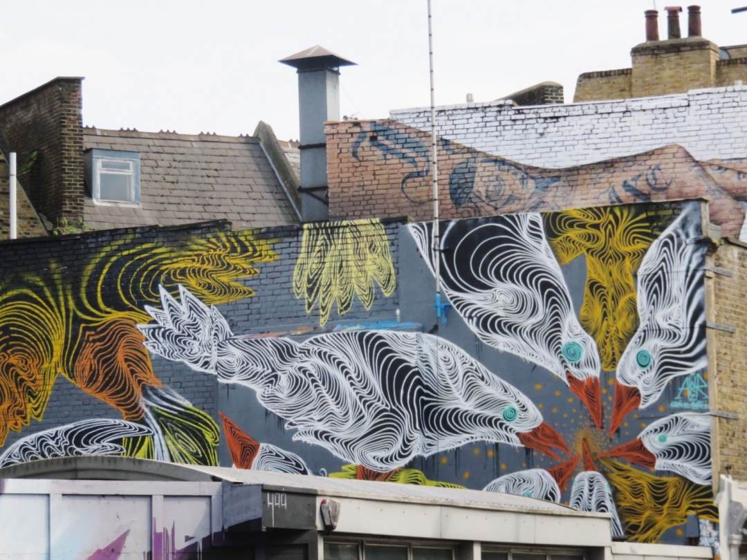 Awer Pigeons in Camden