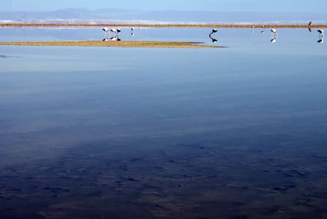 Flamingos at Laguna Chaxa
