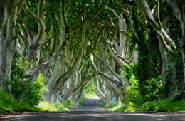 The Dark Hedges should be at the top of your UK bucket list