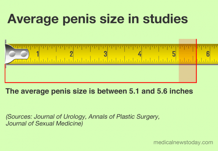 Whats the average size of a mans penis