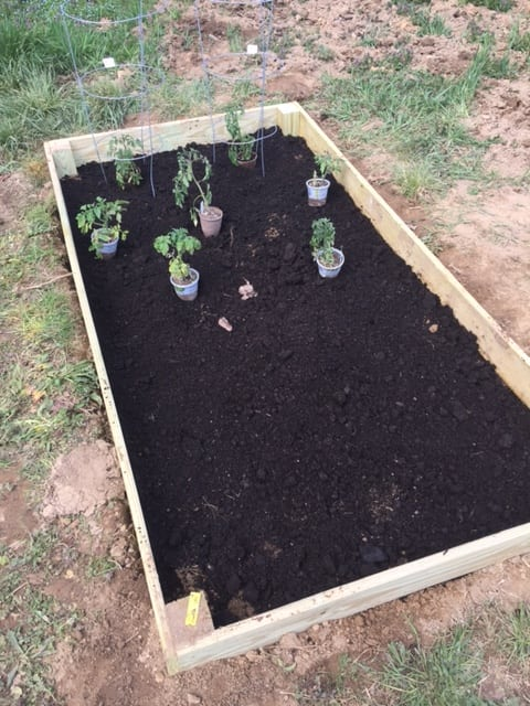place the plants in the veggie garden