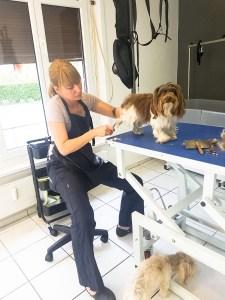The Dog Barber Luzern
