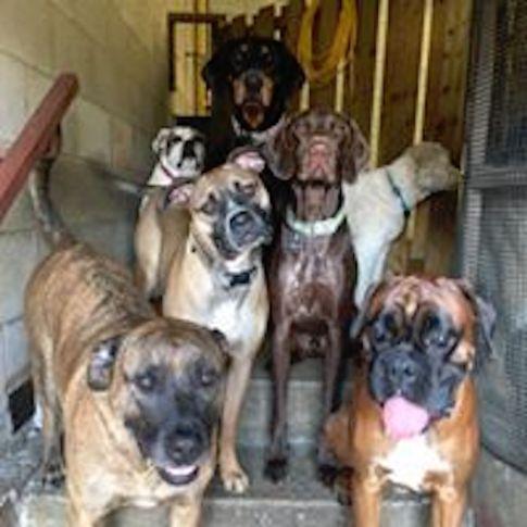 dog-daycare-mississauga