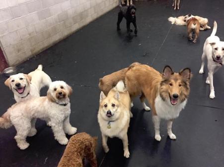 dog-daycare-one