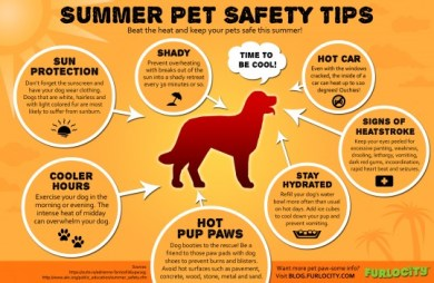 Summer dog safety