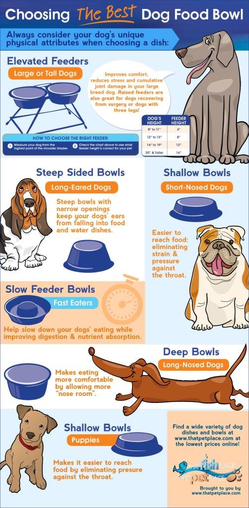 DogFoodWebInfographic