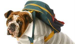 Back-to-school-dog-blog